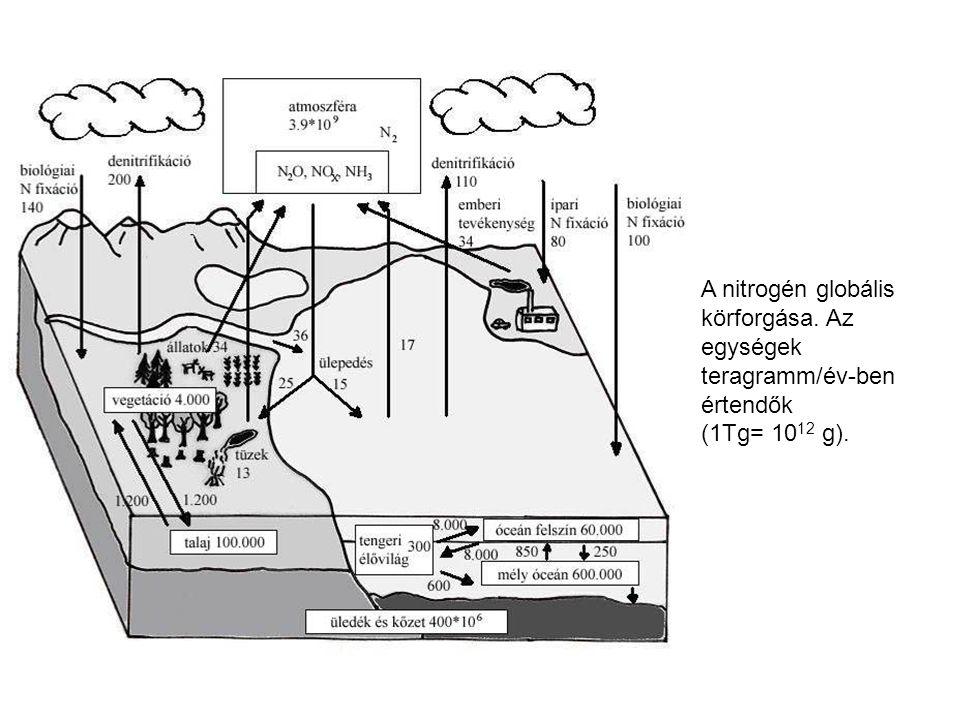 A nitrogén globális körforgása. Az egységek teragramm/év-ben értendők (1Tg= 10 12 g).