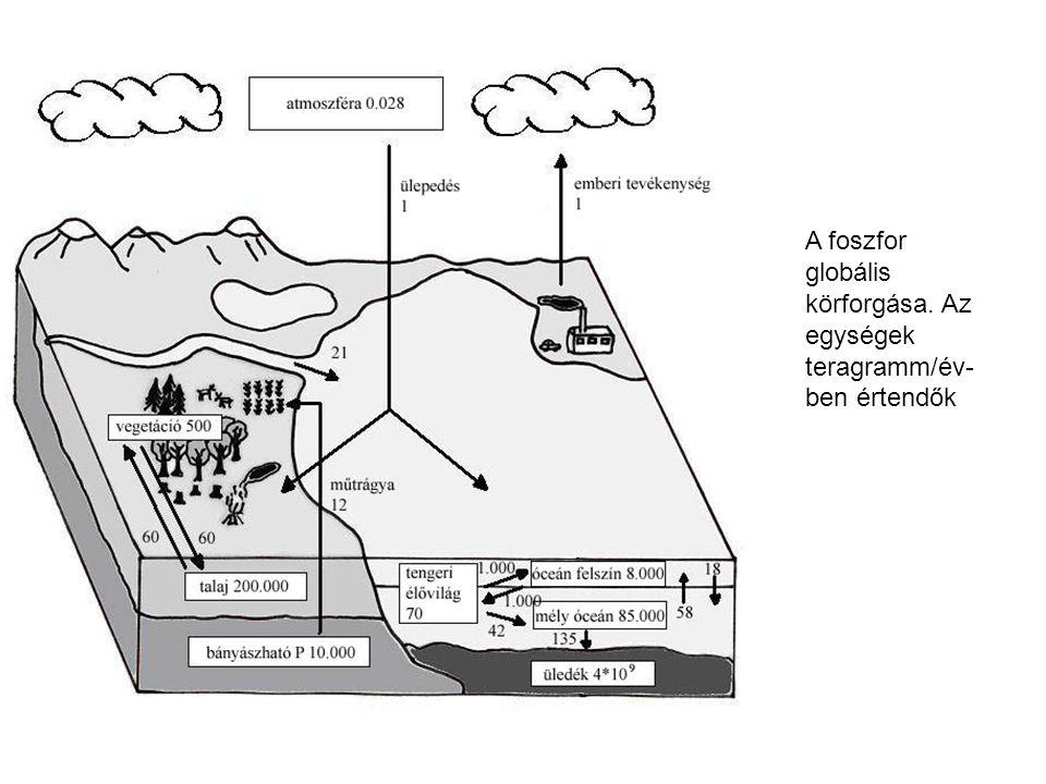 A foszfor globális körforgása. Az egységek teragramm/év- ben értendők