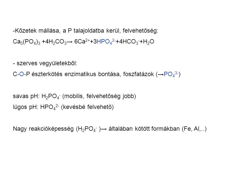 -Kőzetek mállása, a P talajoldatba kerül, felvehetőség: Ca 5 (PO 4 ) 3 +4H 2 CO 3 → 6Ca 2+ +3HPO 4 2- +4HCO 3 - +H 2 O - szerves vegyületekből: C-O-P