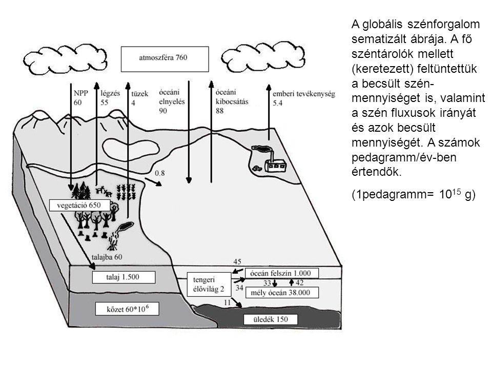 A globális szénforgalom sematizált ábrája. A fő széntárolók mellett (keretezett) feltüntettük a becsült szén- mennyiséget is, valamint a szén fluxusok