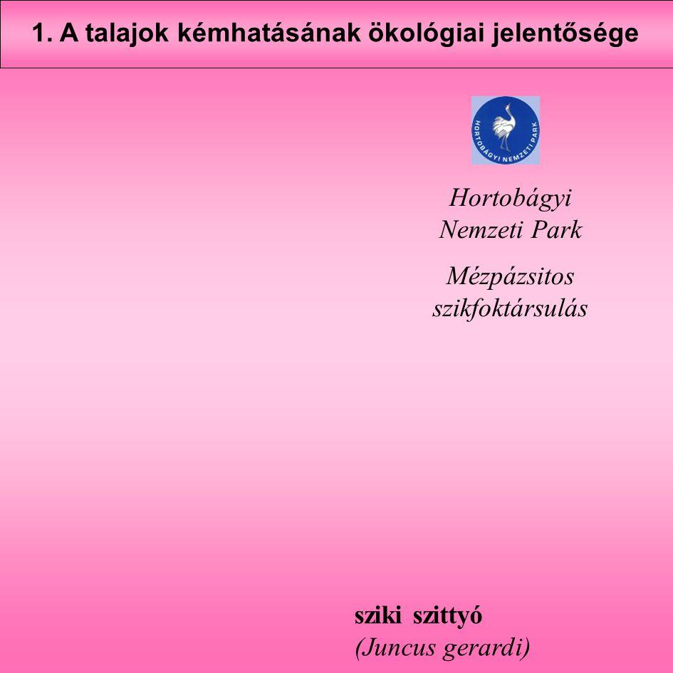 sziki szittyó (Juncus gerardi) Hortobágyi Nemzeti Park Mézpázsitos szikfoktársulás 1. A talajok kémhatásának ökológiai jelentősége