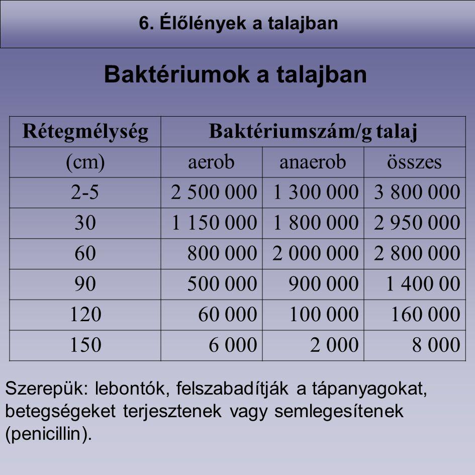 RétegmélységBaktériumszám/g talaj (cm)aerobanaerobösszes 2-52 500 0001 300 0003 800 000 301 150 0001 800 0002 950 000 60800 0002 000 0002 800 000 9050