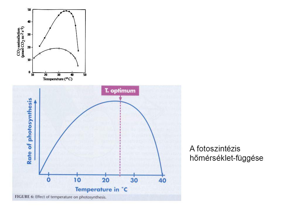 A fotoszintézis hőmérséklet-függése