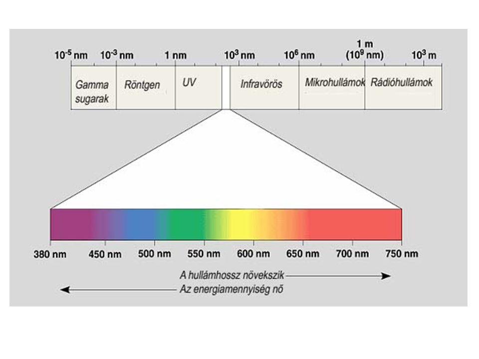 CAM FOTOSZINTÉZIS ÚT (Crassulacean Acid Metabolism)