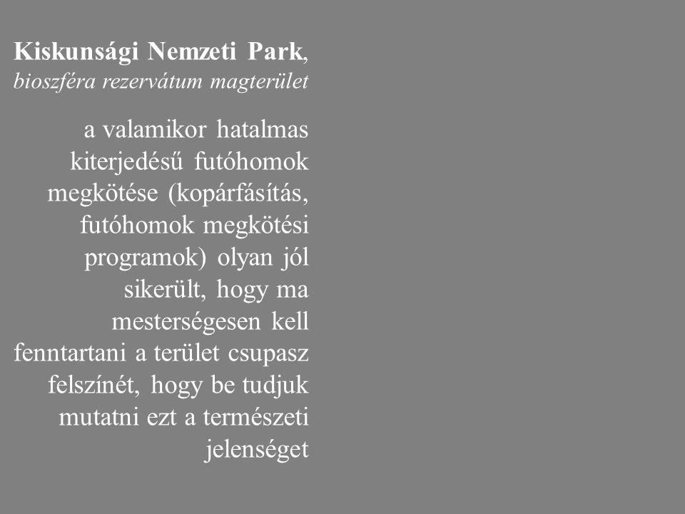 Kiskunsági Nemzeti Park, bioszféra rezervátum magterület a valamikor hatalmas kiterjedésű futóhomok megkötése (kopárfásítás, futóhomok megkötési progr