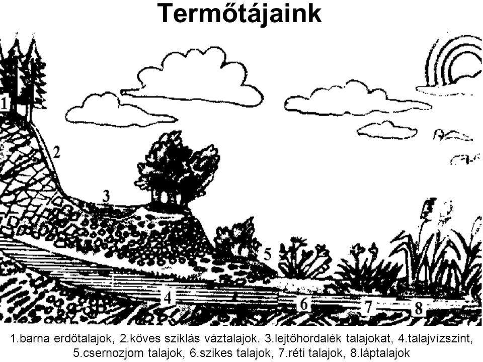 Termőtájaink 1.barna erdőtalajok, 2.köves sziklás váztalajok. 3.lejtőhordalék talajokat, 4.talajvízszint, 5.csernozjom talajok, 6.szikes talajok, 7.ré