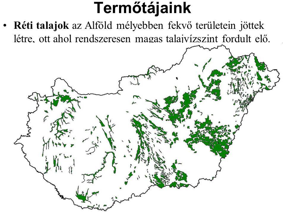 Réti talajok az Alföld mélyebben fekvő területein jöttek létre, ott ahol rendszeresen magas talajvízszint fordult elő. Termőtájaink