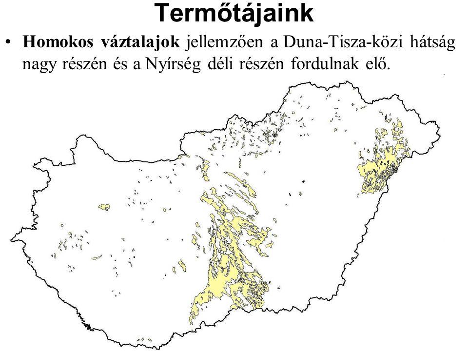 Homokos váztalajok jellemzően a Duna-Tisza-közi hátság nagy részén és a Nyírség déli részén fordulnak elő. Termőtájaink