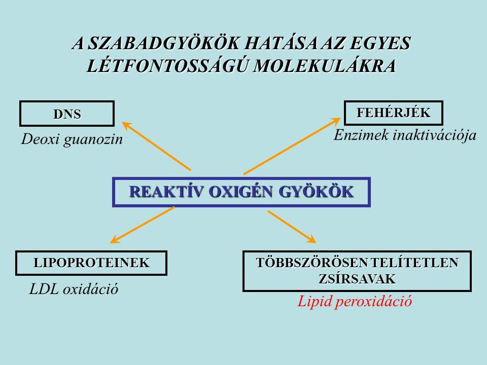 DNS LIPOPROTEINEK FEHÉRJÉK TÖBBSZÖRÖSEN TELÍTETLEN ZSÍRSAVAK REAKTÍV OXIGÉN GYÖKÖK Deoxi guanozin LDL oxidáció Lipid peroxidáció Enzimek inaktivációja