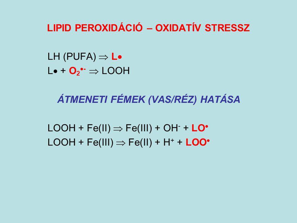 LIPID PEROXIDÁCIÓ – OXIDATÍV STRESSZ LH (PUFA)  L  L  + O 2  -  LOOH ÁTMENETI FÉMEK (VAS/RÉZ) HATÁSA LOOH + Fe(II)  Fe(III) + OH - + LO  LOOH +