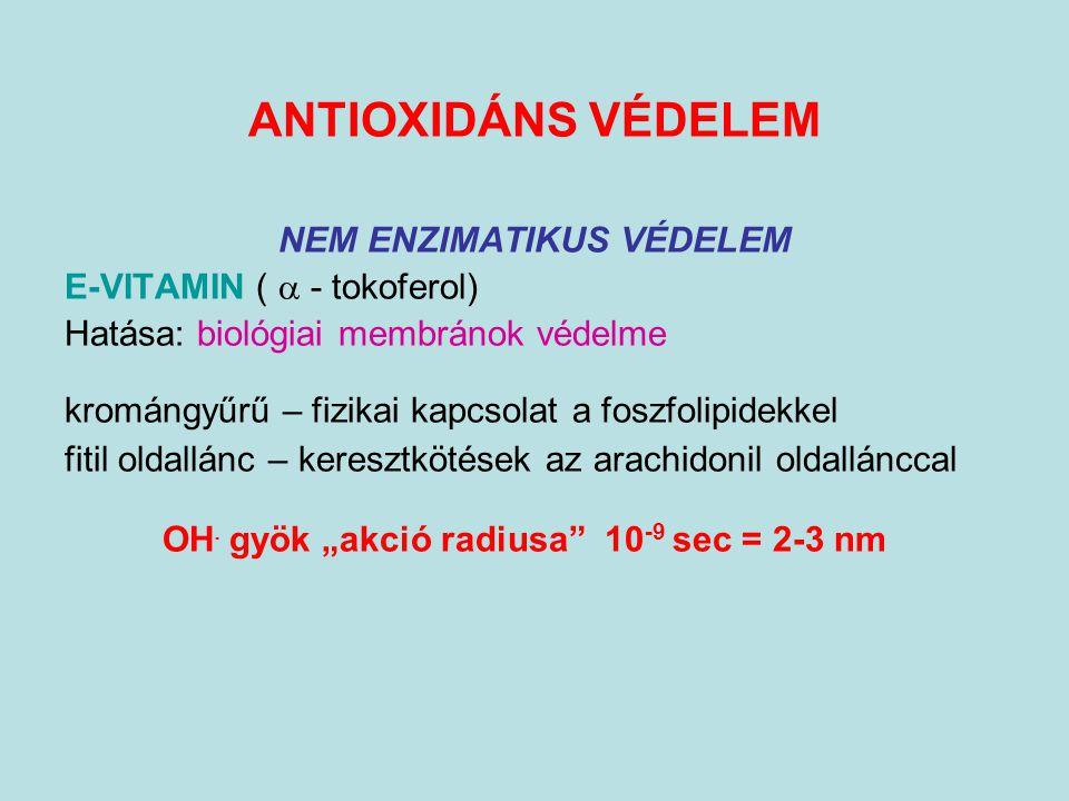 ANTIOXIDÁNS VÉDELEM NEM ENZIMATIKUS VÉDELEM E-VITAMIN (  - tokoferol) Hatása: biológiai membránok védelme kromángyűrű – fizikai kapcsolat a foszfolip