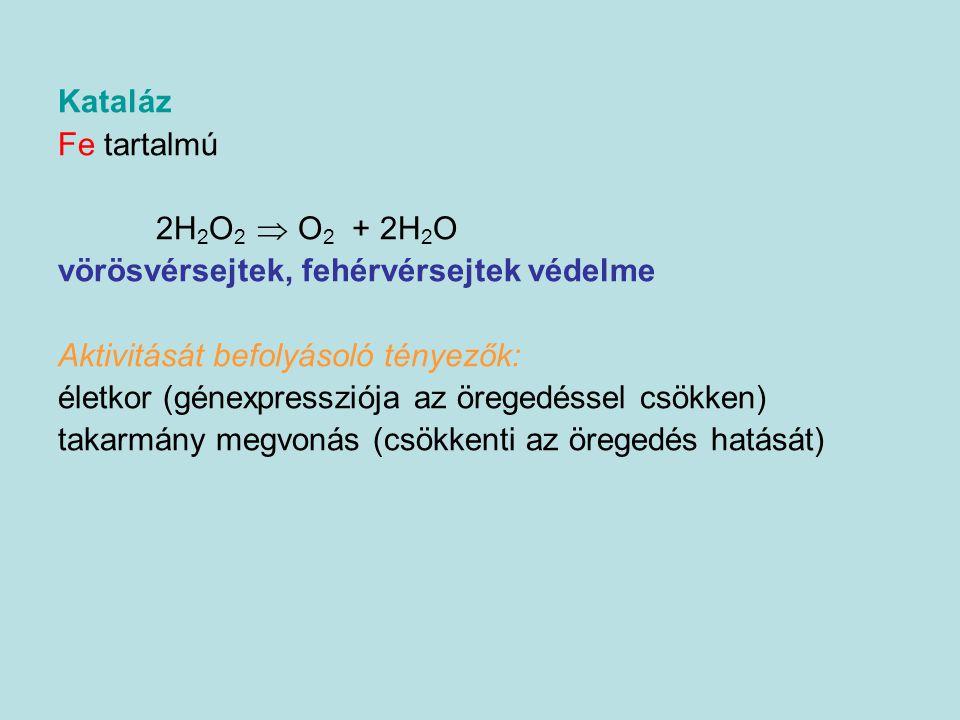Kataláz Fe tartalmú 2H 2 O 2  O 2 + 2H 2 O vörösvérsejtek, fehérvérsejtek védelme Aktivitását befolyásoló tényezők: életkor (génexpressziója az örege