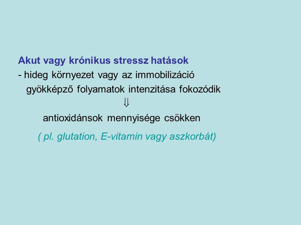 Akut vagy krónikus stressz hatások - hideg környezet vagy az immobilizáció gyökképző folyamatok intenzitása fokozódik  antioxidánsok mennyisége csökk