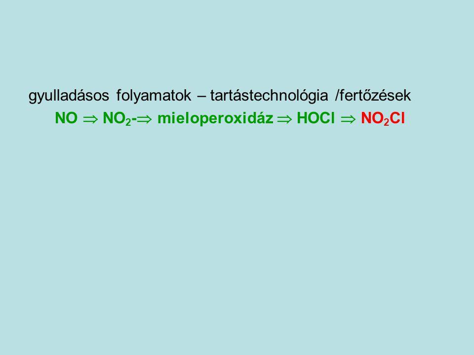 gyulladásos folyamatok – tartástechnológia /fertőzések NO  NO 2 -  mieloperoxidáz  HOCl  NO 2 Cl