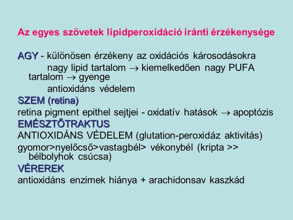 Az egyes szövetek lipidperoxidáció iránti érzékenysége AGY AGY - különösen érzékeny az oxidációs károsodásokra nagy lipid tartalom  kiemelkedően nagy