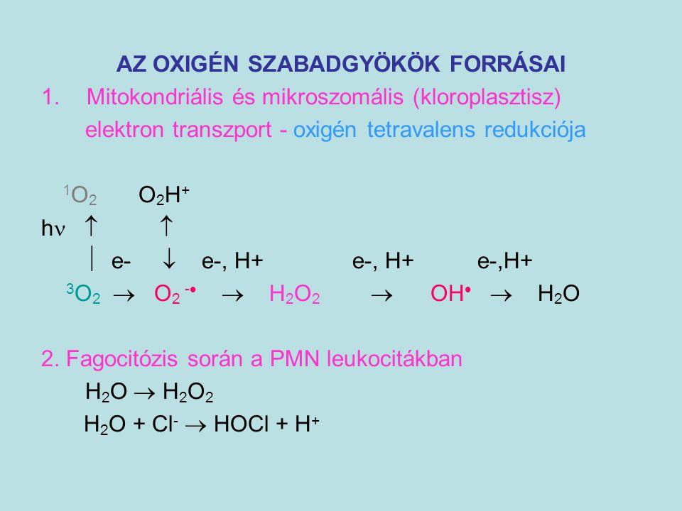 AZ OXIGÉN SZABADGYÖKÖK FORRÁSAI 1.Mitokondriális és mikroszomális (kloroplasztisz) elektron transzport - oxigén tetravalens redukciója 1 O 2 O 2 H + h
