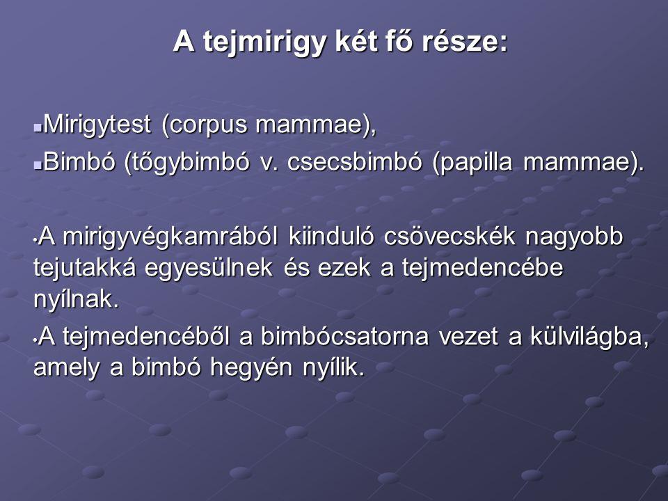 A tejmirigy két fő része: Mirigytest (corpus mammae), Mirigytest (corpus mammae), Bimbó (tőgybimbó v. csecsbimbó (papilla mammae). Bimbó (tőgybimbó v.