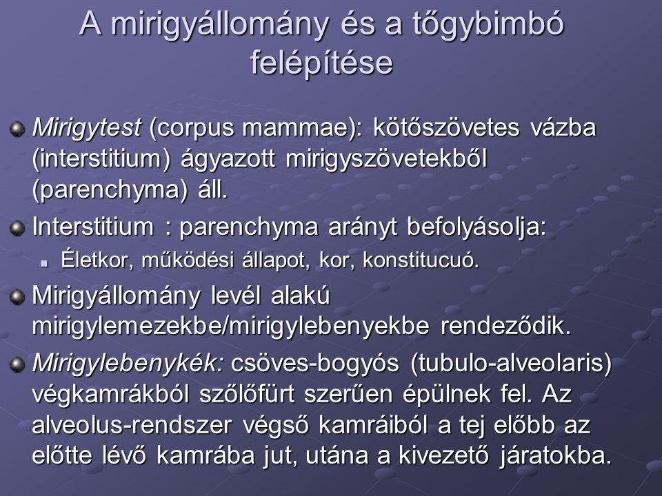 A mirigyállomány és a tőgybimbó felépítése Mirigytest (corpus mammae): kötőszövetes vázba (interstitium) ágyazott mirigyszövetekből (parenchyma) áll.
