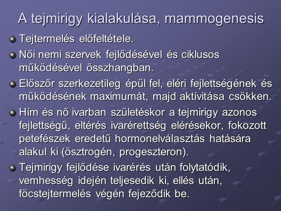 A tejmirigy kialakulása, mammogenesis Tejtermelés előfeltétele. Női nemi szervek fejlődésével és ciklusos működésével összhangban. Előszőr szerkezetil