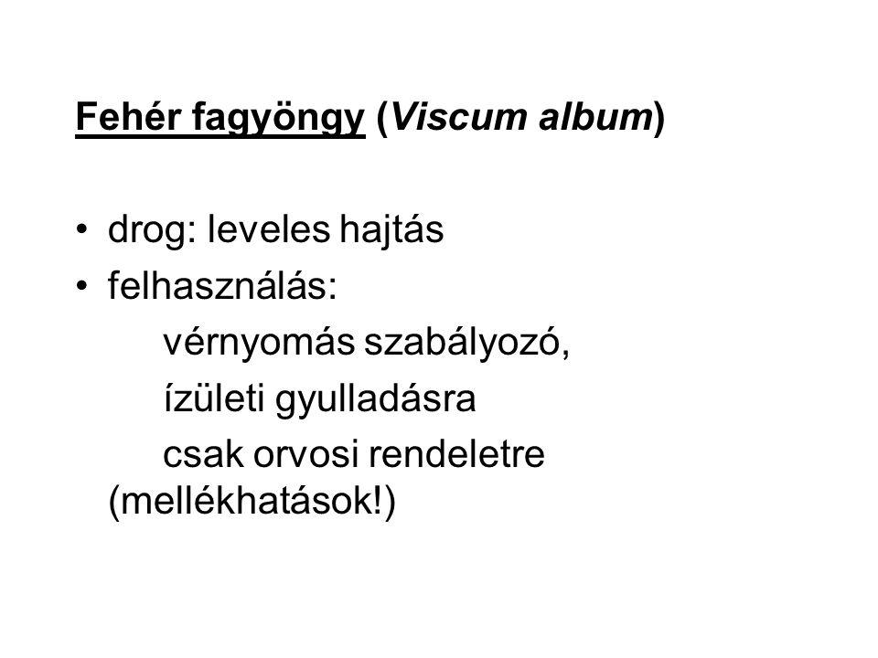 Fehér fagyöngy (Viscum album) drog: leveles hajtás felhasználás: vérnyomás szabályozó, ízületi gyulladásra csak orvosi rendeletre (mellékhatások!)