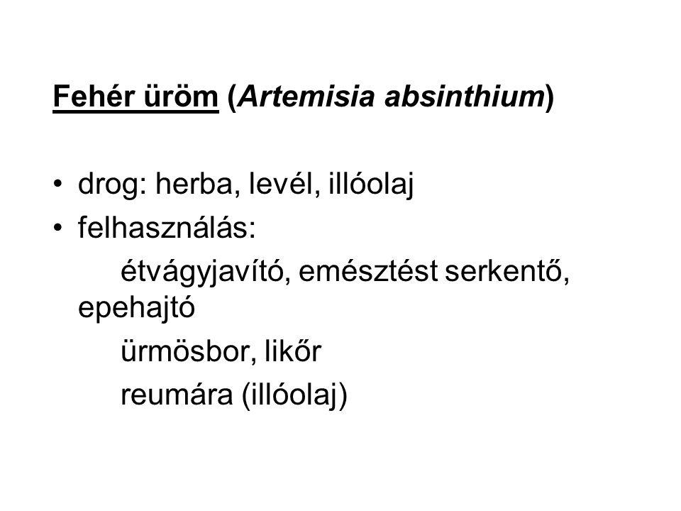Fehér üröm (Artemisia absinthium) drog: herba, levél, illóolaj felhasználás: étvágyjavító, emésztést serkentő, epehajtó ürmösbor, likőr reumára (illóo