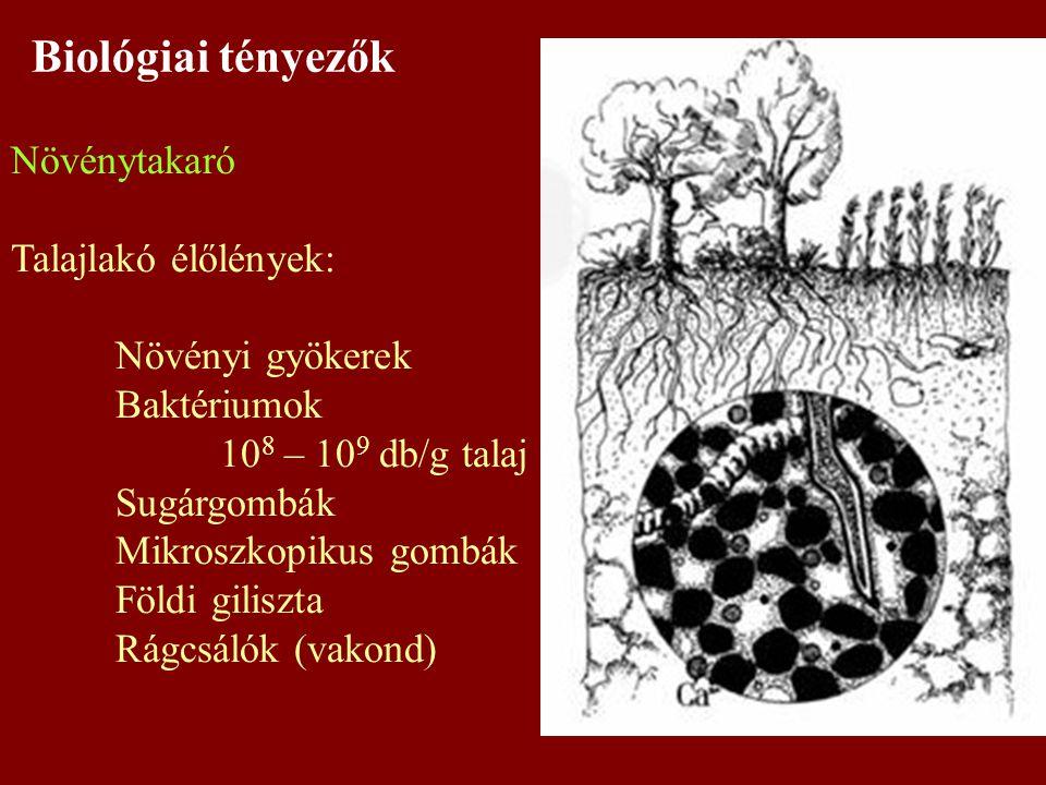 Biológiai tényezők Növénytakaró Talajlakó élőlények: Növényi gyökerek Baktériumok 10 8 – 10 9 db/g talaj Sugárgombák Mikroszkopikus gombák Földi gilis