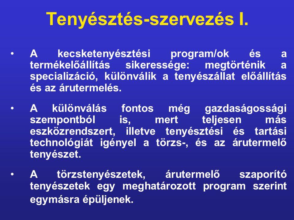 Tenyésztés-szervezés I. A kecsketenyésztési program/ok és a termékelőállítás sikeressége: megtörténik a specializáció, különválik a tenyészállat előál