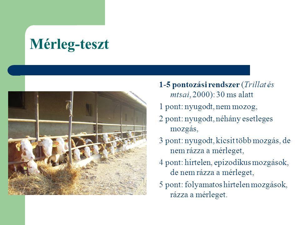 Mérleg-teszt fejlesztésének vizsgálata Vizsgálat: 2004, Bonyhád, 30 magyartarka üszőborjú két bíráló (A, B), 10., 30.