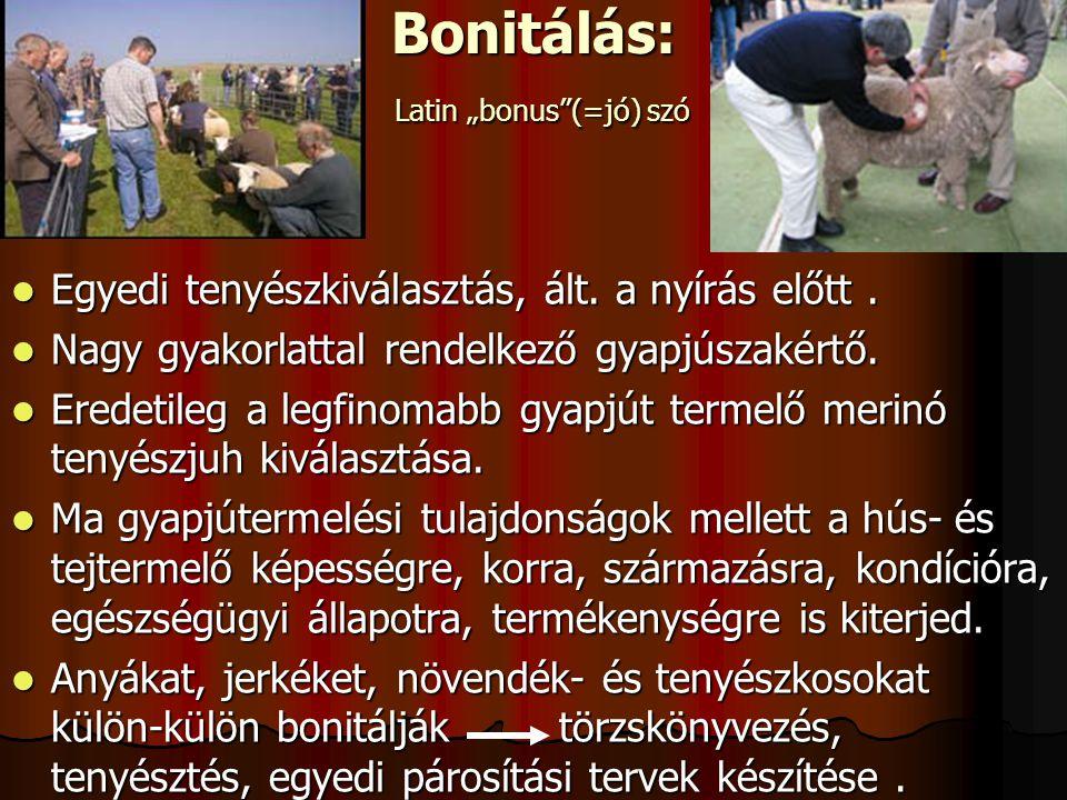 """Bonitálás: Latin """"bonus (=jó) szó Egyedi tenyészkiválasztás, ált."""