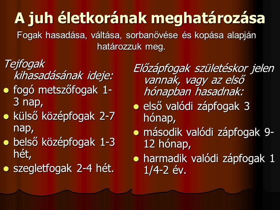 A juh életkorának meghatározása Tejfogak kihasadásának ideje: fogó metszőfogak 1- 3 nap, fogó metszőfogak 1- 3 nap, külső középfogak 2-7 nap, külső középfogak 2-7 nap, belső középfogak 1-3 hét, belső középfogak 1-3 hét, szegletfogak 2-4 hét.