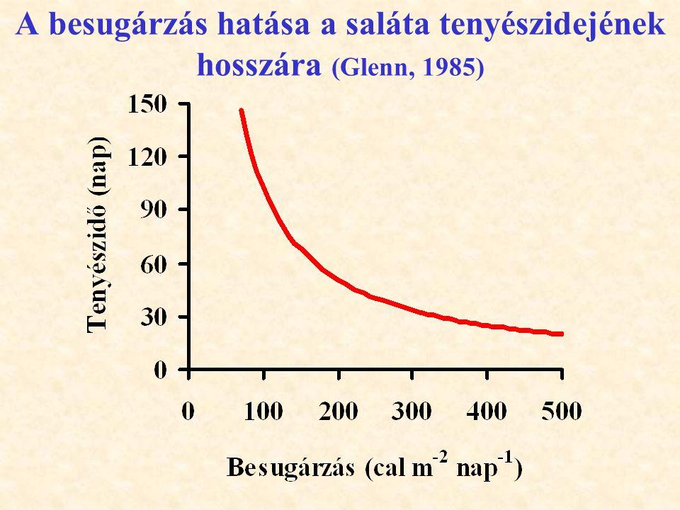 A besugárzás hatása a saláta tenyészidejének hosszára (Glenn, 1985)