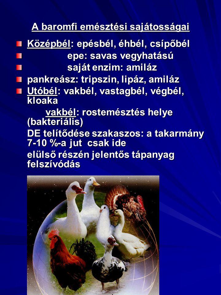 A baromfi emésztési sajátosságai Középbél: epésbél, éhbél, csípőbél epe: savas vegyhatású epe: savas vegyhatású saját enzim: amiláz saját enzim: amiláz pankreász: tripszin, lipáz, amiláz Utóbél: vakbél, vastagbél, végbél, kloaka vakbél: rostemésztés helye (bakteriális) DE telítődése szakaszos: a takarmány 7-10 %-a jut csak ide elülső részén jelentős tápanyag felszívódás elülső részén jelentős tápanyag felszívódás