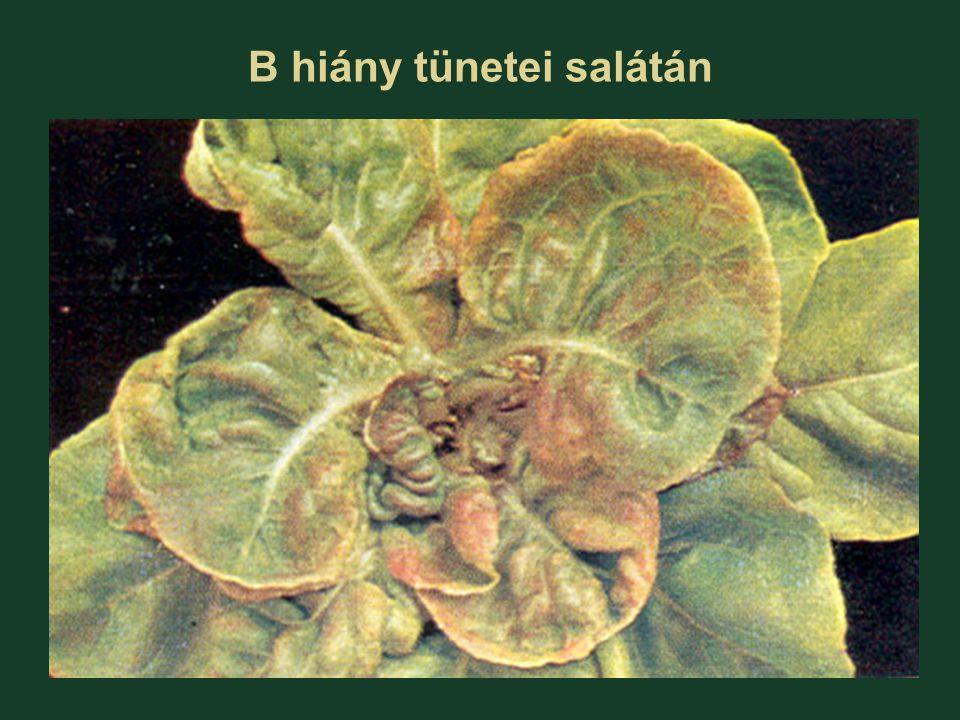 B hiány tünetei salátán