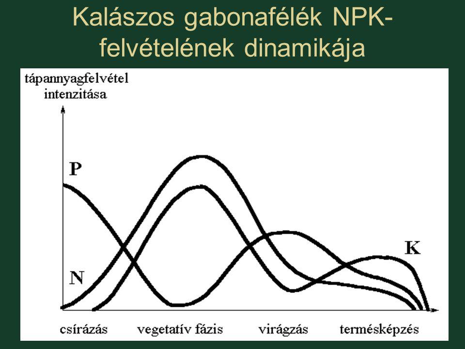 Kalászos gabonafélék NPK- felvételének dinamikája