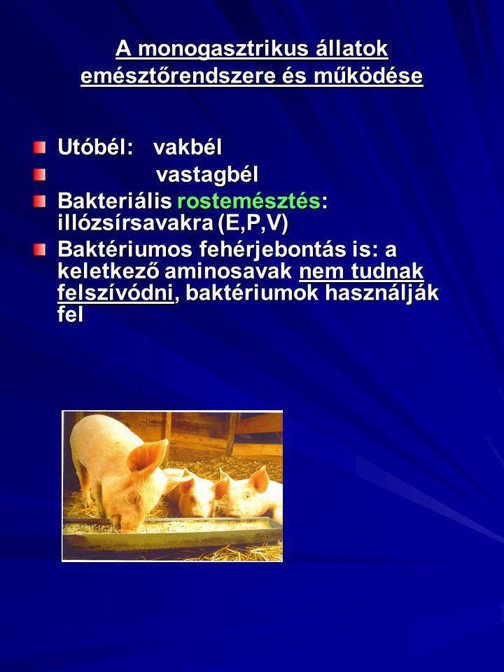 A monogasztrikus állatok emésztőrendszere és működése Utóbél: vakbél vastagbél vastagbél Bakteriális rostemésztés: illózsírsavakra (E,P,V) Baktériumos fehérjebontás is: a keletkező aminosavak nem tudnak felszívódni, baktériumok használják fel