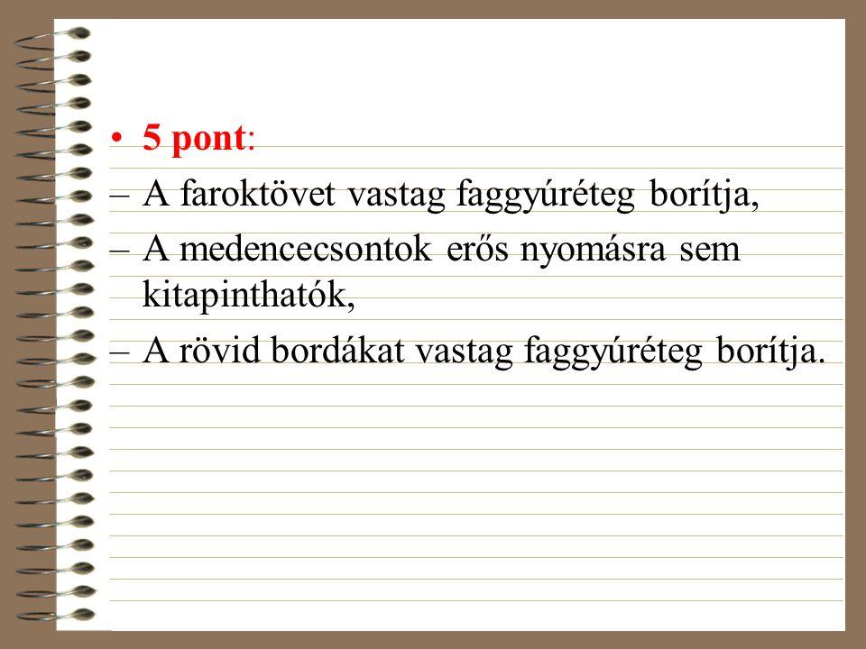 5 pont: –A faroktövet vastag faggyúréteg borítja, –A medencecsontok erős nyomásra sem kitapinthatók, –A rövid bordákat vastag faggyúréteg borítja.
