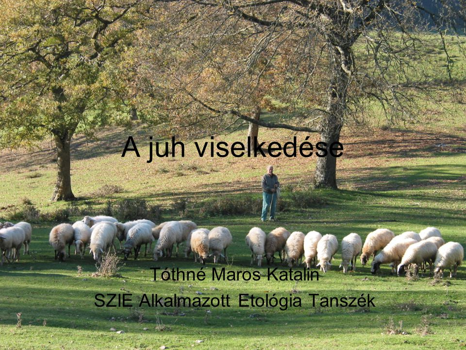 Származás Vad fajok: muflon (Ovis orientalis) argali (O.