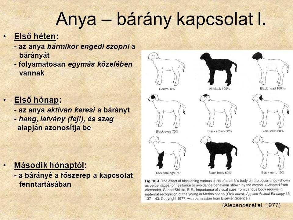 Anya-bárány kapcsolat II.