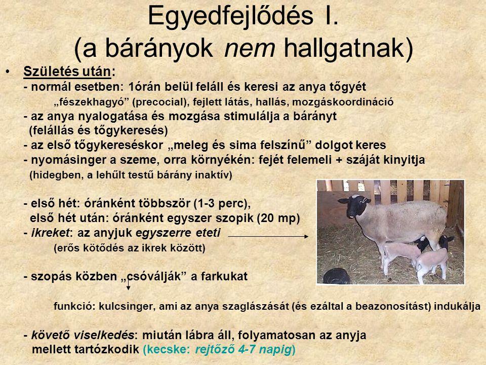 """Egyedfejlődés I. (a bárányok nem hallgatnak) Születés után: - normál esetben: 1órán belül feláll és keresi az anya tőgyét """"fészekhagyó"""" (precocial), f"""