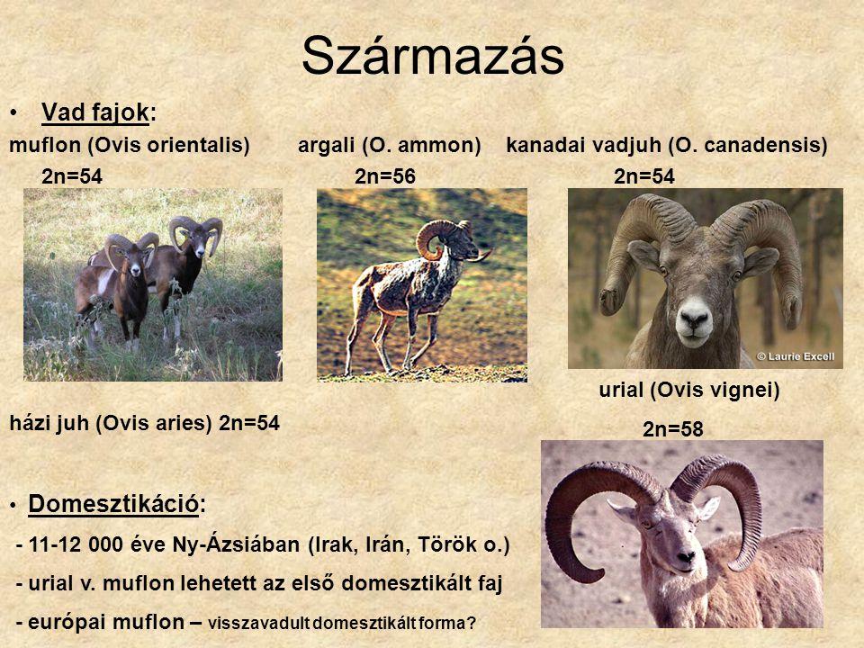 Származás Vad fajok: muflon (Ovis orientalis) argali (O. ammon) kanadai vadjuh (O. canadensis) 2n=542n=562n=54 urial (Ovis vignei) 2n=58 házi juh (Ovi