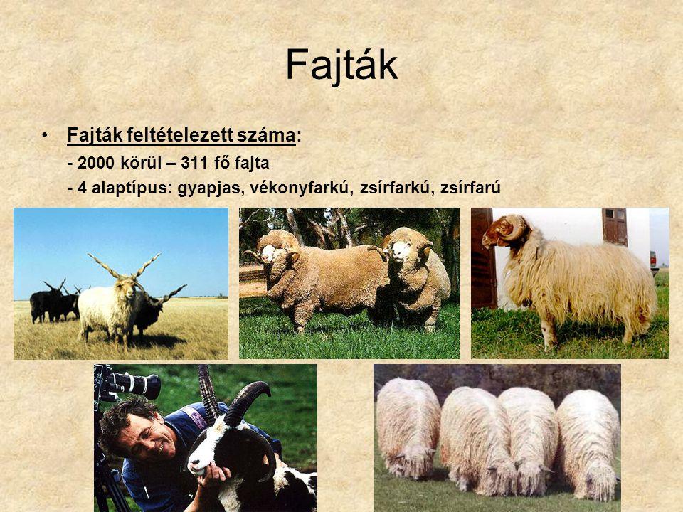 Fajták Fajták feltételezett száma: - 2000 körül – 311 fő fajta - 4 alaptípus: gyapjas, vékonyfarkú, zsírfarkú, zsírfarú