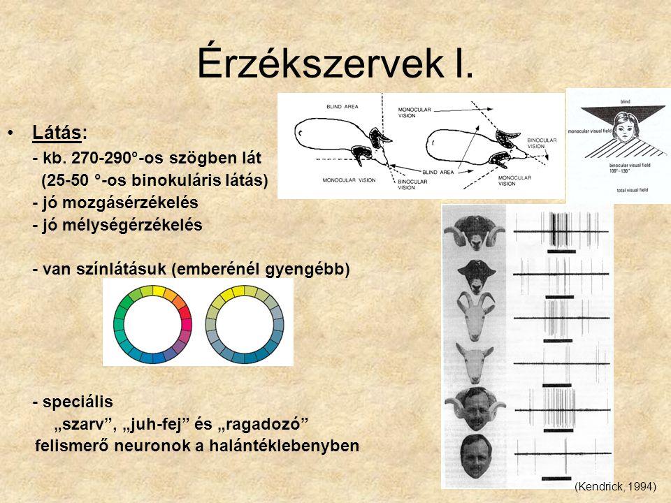 Érzékszervek I. Látás: - kb. 270-290°-os szögben lát (25-50 °-os binokuláris látás) - jó mozgásérzékelés - jó mélységérzékelés - van színlátásuk (embe