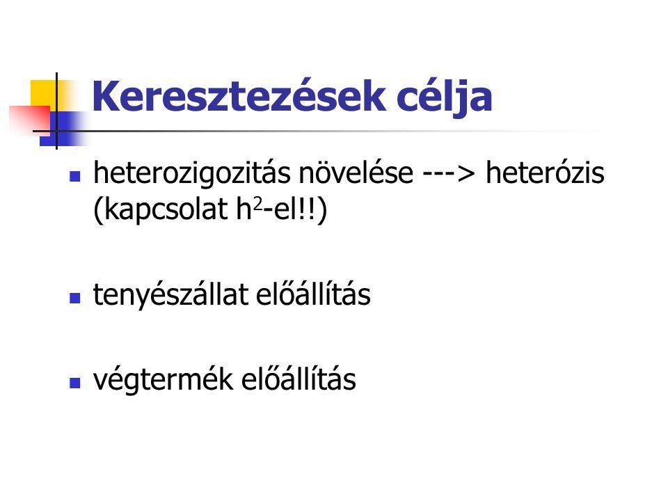 Keresztezések célja heterozigozitás növelése ---> heterózis (kapcsolat h 2 -el!!) tenyészállat előállítás végtermék előállítás