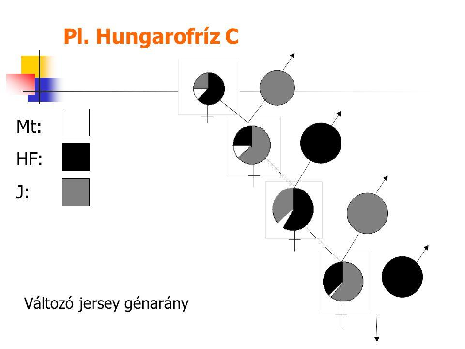 Pl. Hungarofríz C Mt: HF: J: Változó jersey génarány