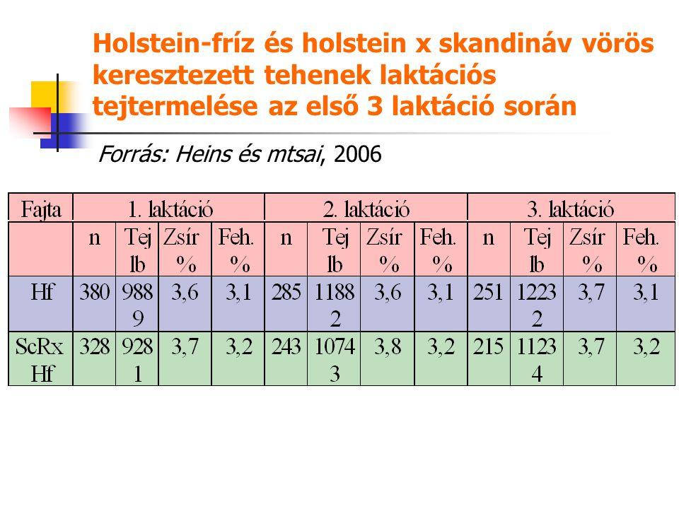 Holstein-fríz és holstein x skandináv vörös keresztezett tehenek laktációs tejtermelése az első 3 laktáció során Forrás: Heins és mtsai, 2006