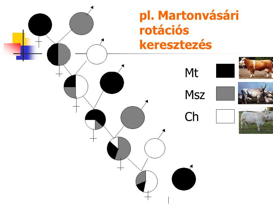 pl. Martonvásári rotációs keresztezés Mt Msz Ch