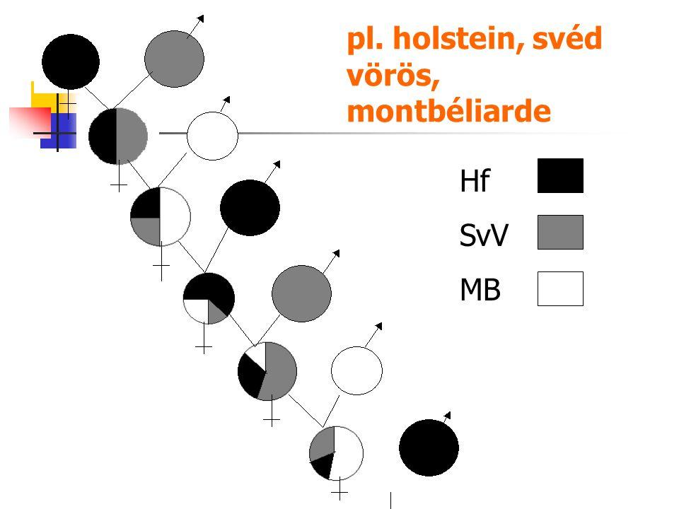 Hf SvV MB pl. holstein, svéd vörös, montbéliarde