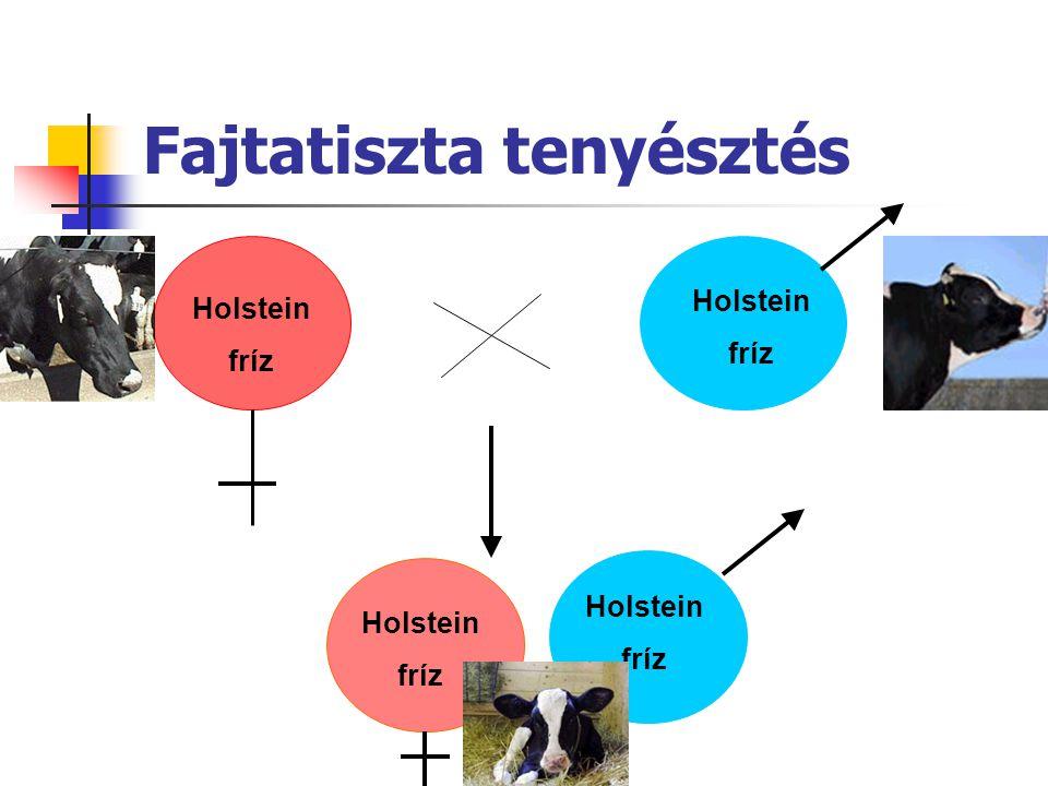 Túlélési arányok Holstein 72489969386 Normande x Holstein 4372498 97*94* Montbeliarde x Holstein 8063399 97*96* Scandinavian Red x Holstein 549149896 93* Fajta TehénBika30 n150 n305 n ------------ (%) ----------- Egyedszám Túlélésl Hansen és mtsai, 2006, Heins és mtsai, 2006