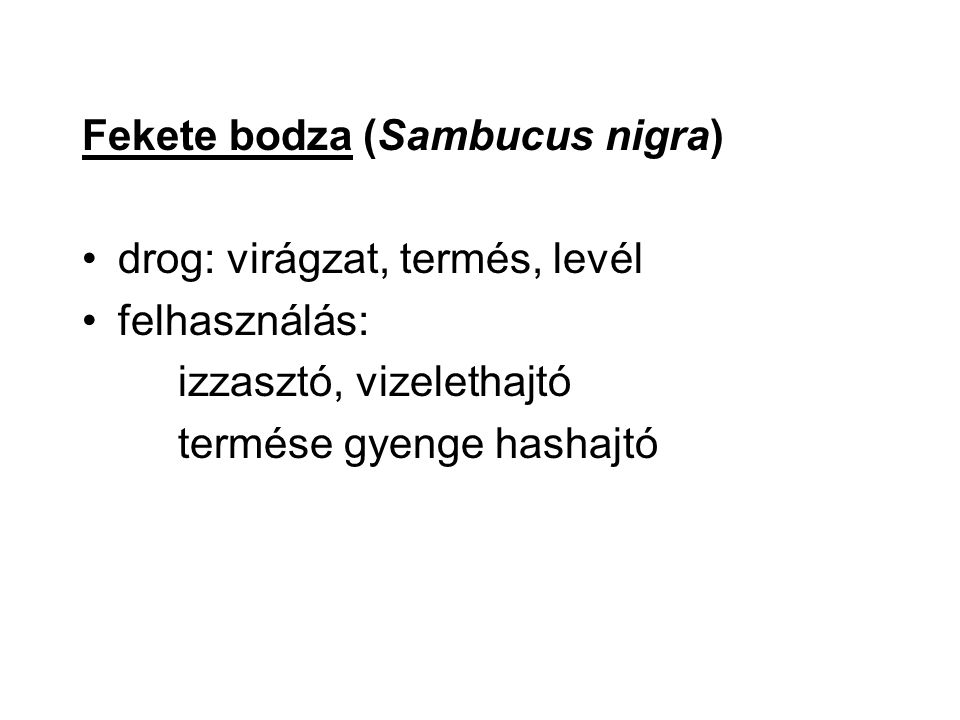 Fekete bodza (Sambucus nigra) drog: virágzat, termés, levél felhasználás: izzasztó, vizelethajtó termése gyenge hashajtó