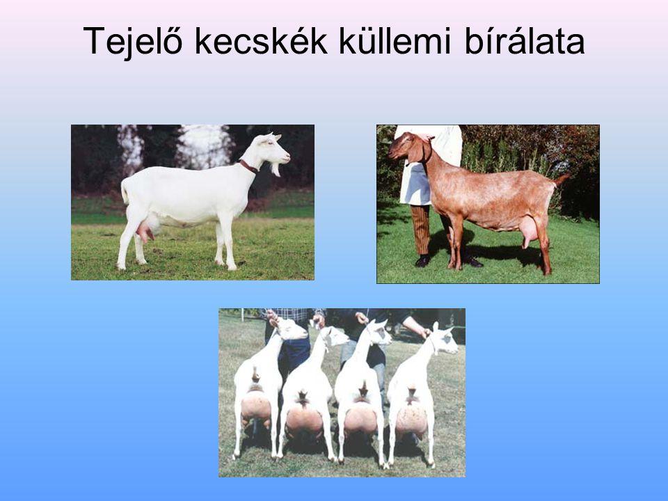 Tejelő kecskék küllemi bírálata